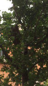 Sciame su albero